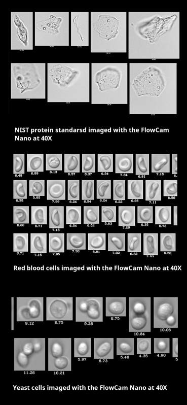 Nano collages for website product page - NIST protein standards, red blood cells, yeast cells